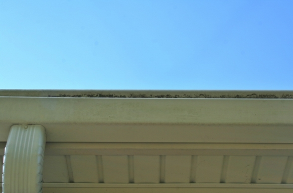 how-to-clean-moldy-bricks-and-gutters